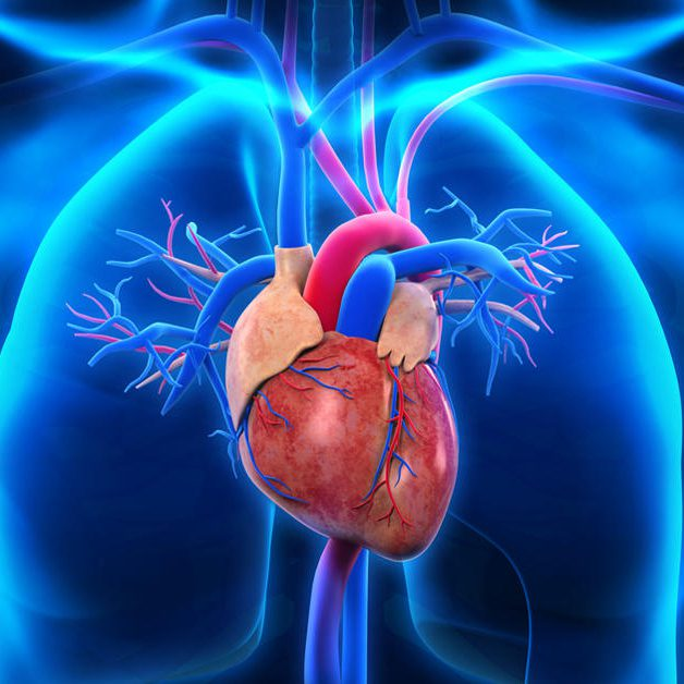 mitraclip-procedure-repairs-leaking-heart-valve